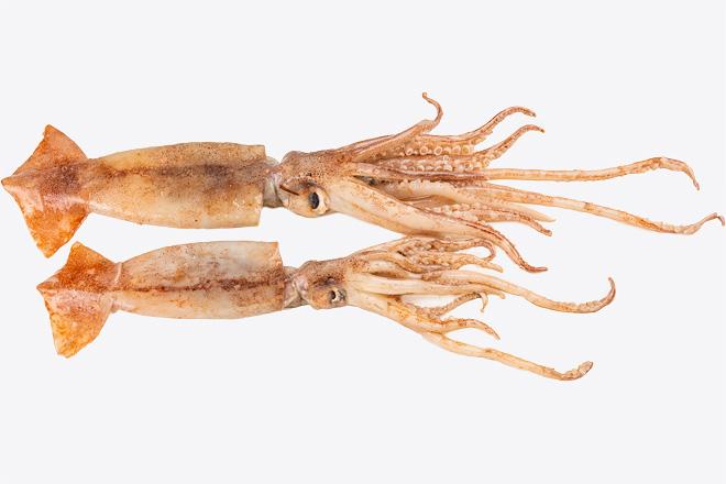 Фото Кальмар «Broadtail squid», Греция