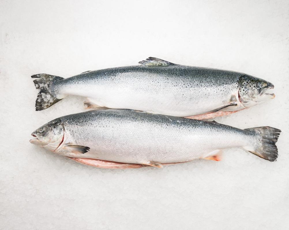 Лосось «Salmon» охолоджений 5-9 ваг