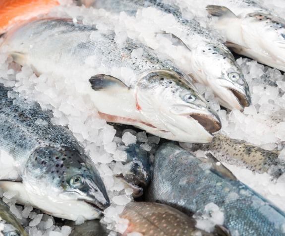 Охолоджені морепродукти