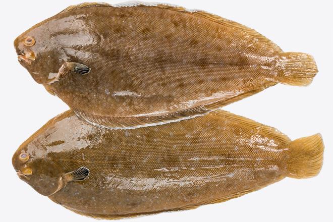 Морський язик Лемонсоль корол. «Lemon Sole» охол.