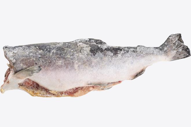 Photo Pink (hump-back) salmon