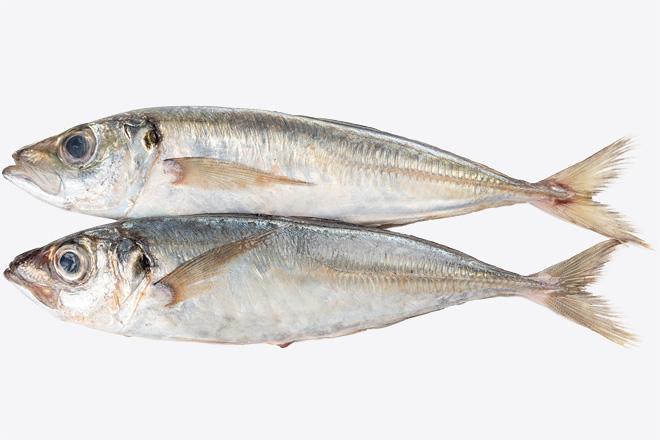 Фото Ставрида середземноморська «Horse mackerel» охолоджена вагова, Греція