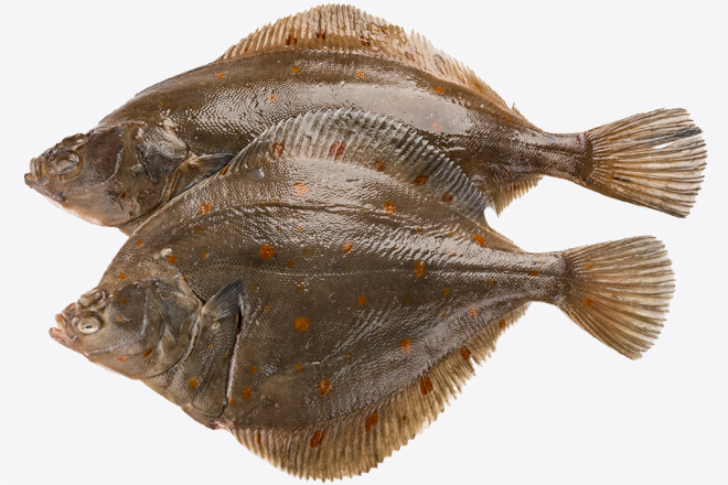 Photo Flounder Plaice chilled