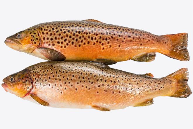 Форель «Trout» дефрост. ваг Норвегія